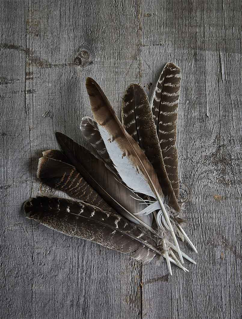 healing arts feathers