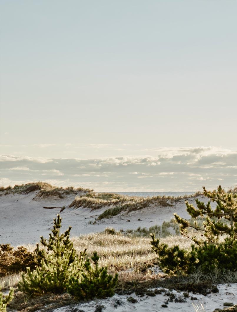 beach dunes