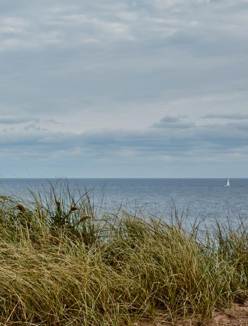 beach grass and ocean view